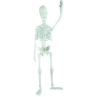 Glowing Human Skeleton