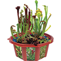 Carnivorous Creations Dome Terrarium Kit