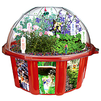 Fairy Triad Dome Terrarium