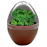 Good Luck Egg Micro-Terrarium