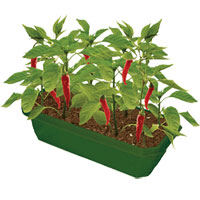 Sprout n Grow Greenhouse - Hot Peppers