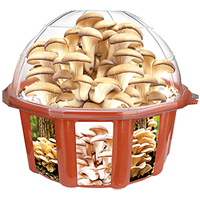 Grown Your Own Oyster Mushrooms Dome Terrarium