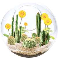 Mini Desertscape Glass Terrarium