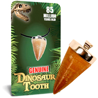 Real Dino Tooth Necklace