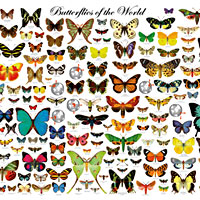Butterflies of the World Poster