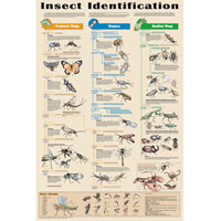 Insect Identification Chart Poster