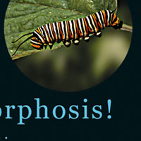 Butterfly Metamorphosis Flip Book