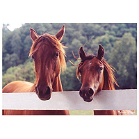 Horse Corral Jigsaw Puzzle - 100 pc