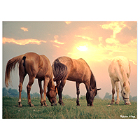 Sunrise Horses Jigsaw Puzzle - 300 pc