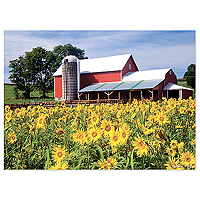 Sunflower Farm Jigsaw Puzzle - 300 pc