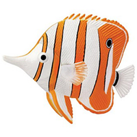 4D Copperband Butterfly Fish Puzzle