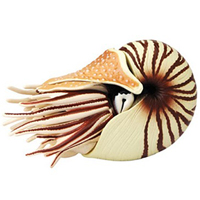 4D Chambered Nautilus Puzzle