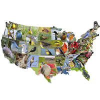 USA Shaped Puzzle - State Birds