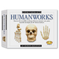 Humanworks Skeleton Kit