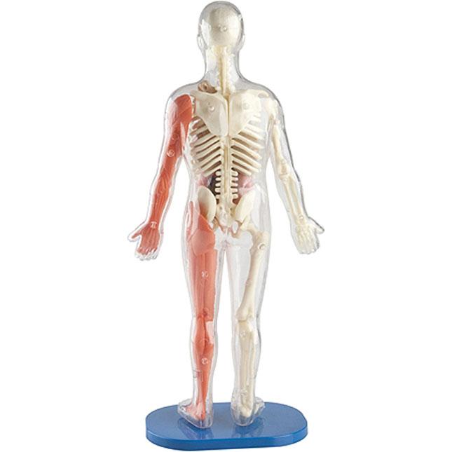 squishy human body