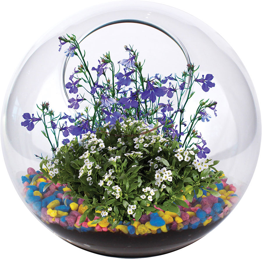 mini fairy garden glass terrarium. Black Bedroom Furniture Sets. Home Design Ideas