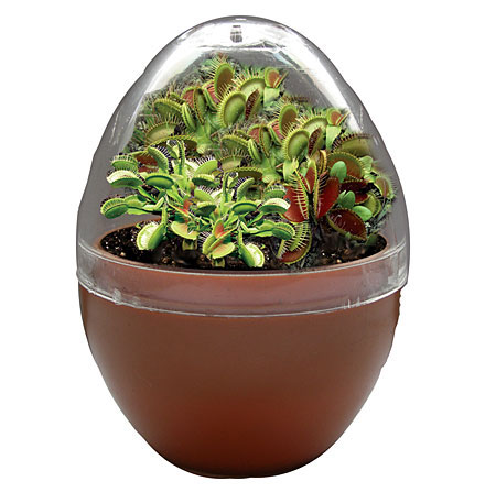 fly trap fiends micro terrarium. Black Bedroom Furniture Sets. Home Design Ideas