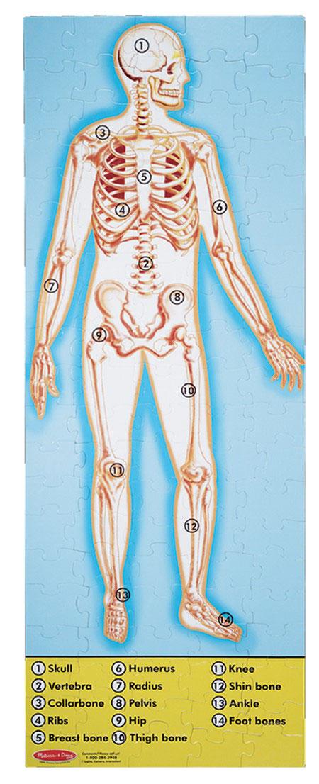 Human Anatomy Floor Puzzle