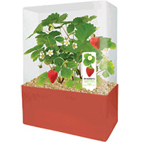 Plants That Work - Sensational Strawberries