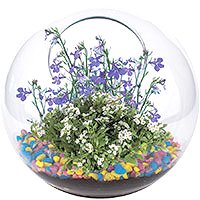 Mini Fairy Garden Glass Terrarium